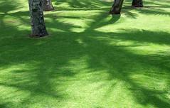Lawn | by Dan Zen