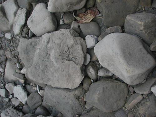 rock geotagged fossil westvirginia geolat39064607 geolon7865505