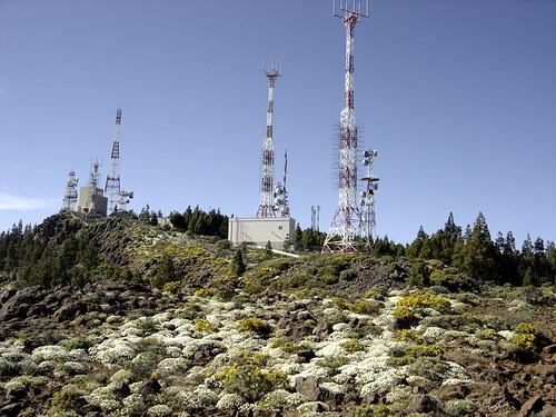 Wild Daisies over at Pozo de las Nieves | by elsua