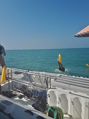 Open water swimming in Black Sea