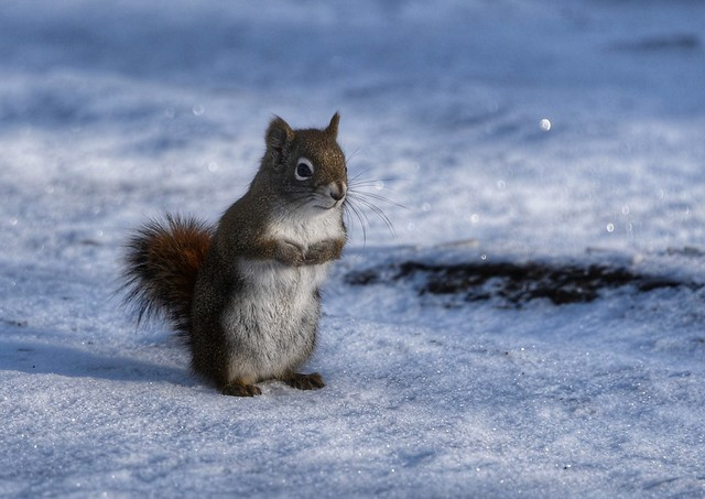 Squirrel, Alberta - Canada