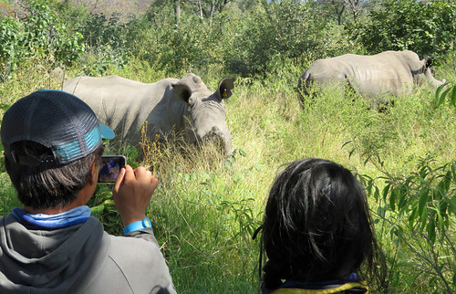 rhinos-up-close   by quirkytravelguy