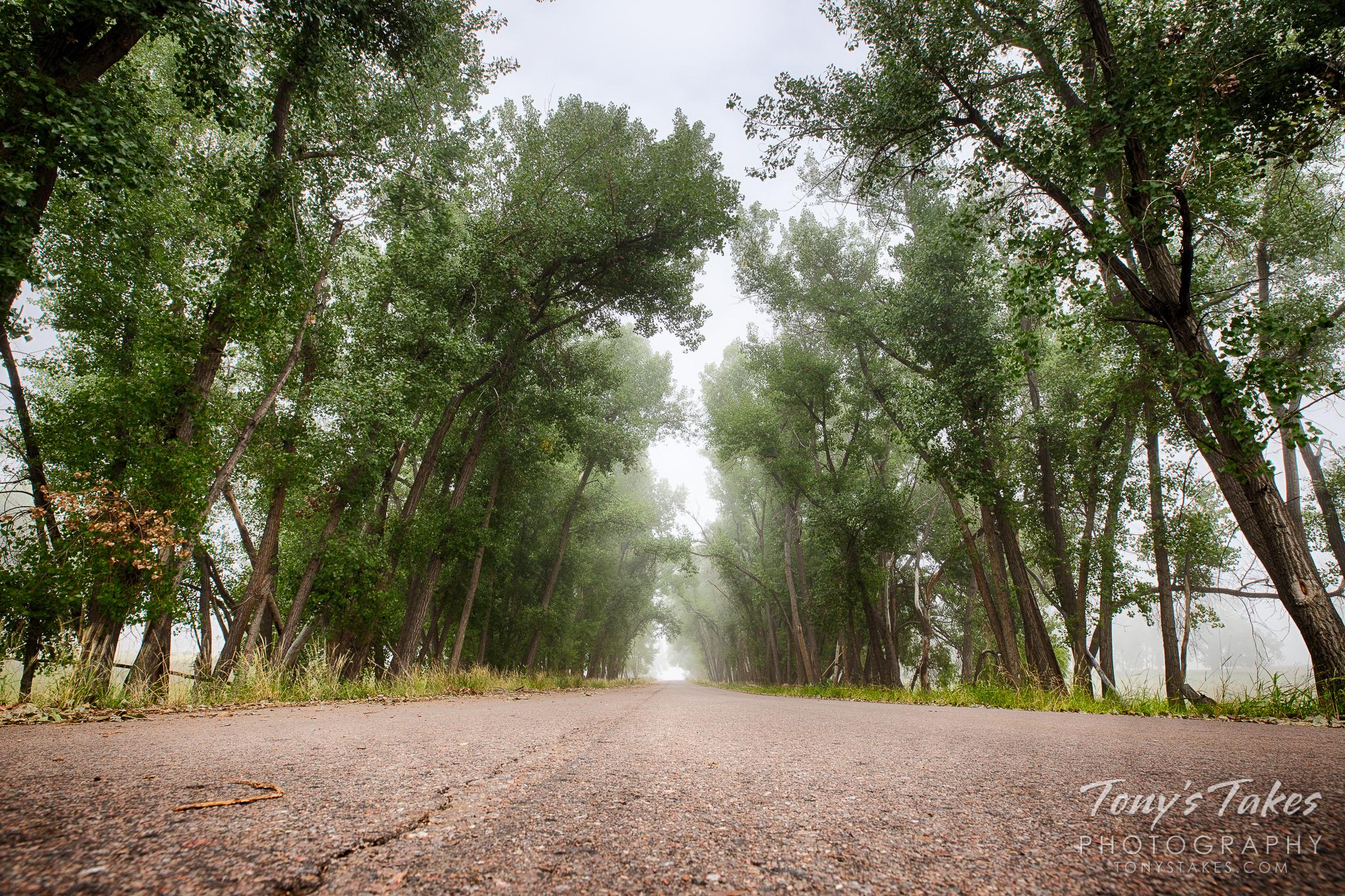 Foggy summer morning back-road