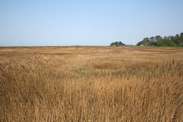 Marshes at Thornham