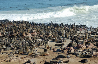 cape-cross-seal-colony | by quirkytravelguy