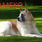 DSC03383 Kameko