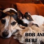 6bob_bert