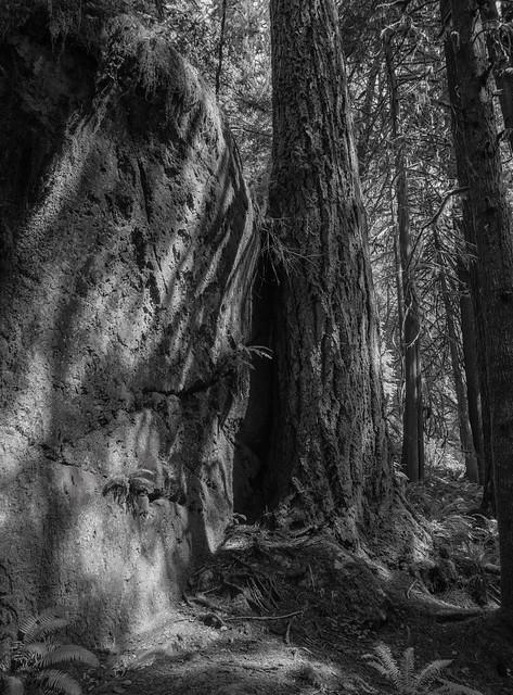 Big Cedar Tree Trail-3