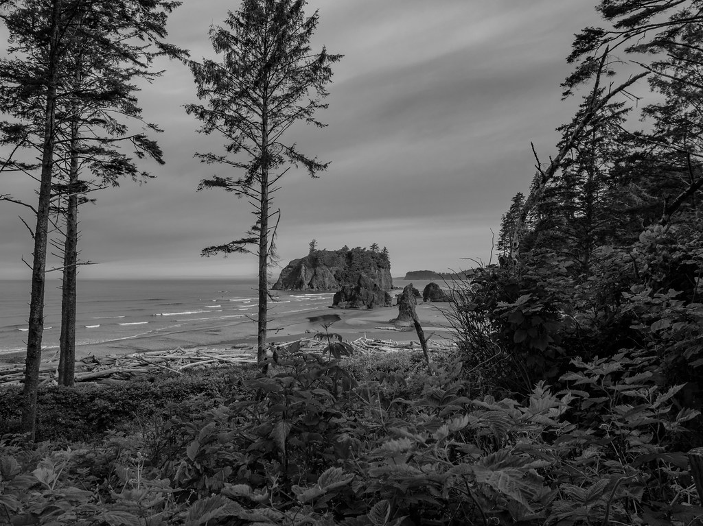 Ruby Beach Trail-3