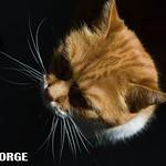 7George