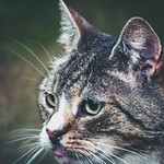 2018-07-26_21-20-00 - Evening Cat Bokeh
