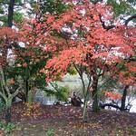 Herbstlaub am Ufer des Ümminger Sees