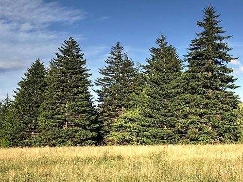 graysonhighlandsstatepark virginia landscape grass meadow trees sky scenic nature
