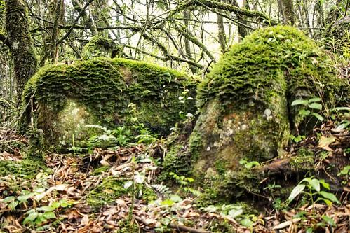 rocks nature landscapes green