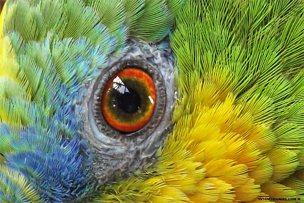 Eye and feathers