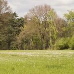 Frühlingswiese im NSG Kirchheller Heide in Bottrop