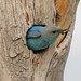 Mountain Bluebird by Bob Gunderson