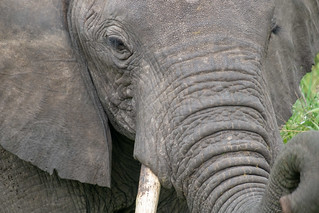 Trunk | by Laura Jacobsen