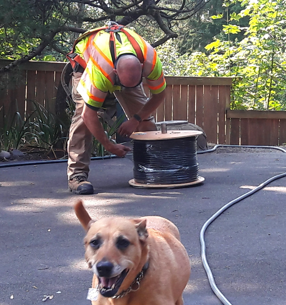 Rosie the dog, Chris from Comcast, running a new line, coi