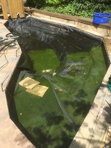Blackfield pond clean