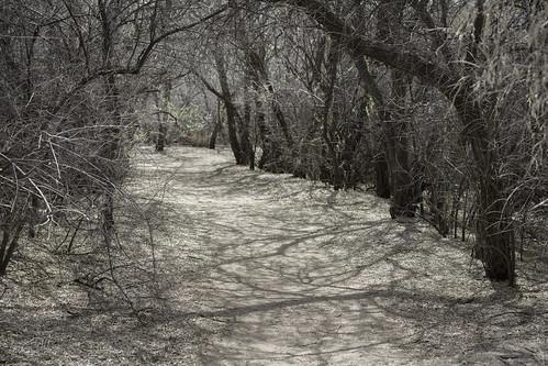 Portal   by Trail Image