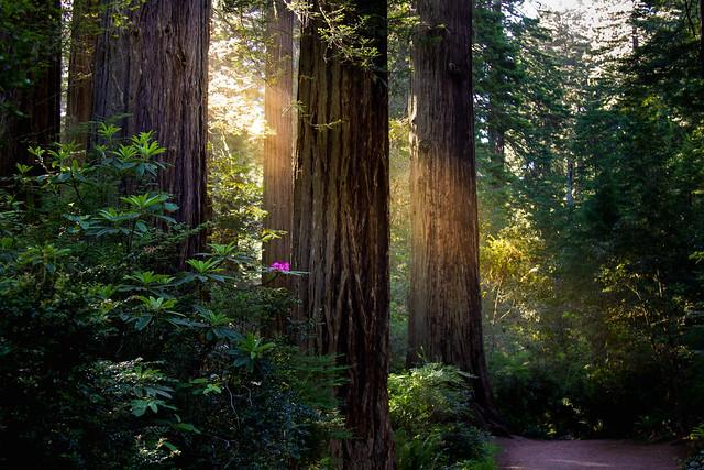 Lady Bird Johnson Grove Trail - Explore #3