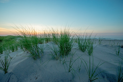 seagrass seascape beach dune dunes sunrise dawn nikond3400 jonathanlorio morning peaceful