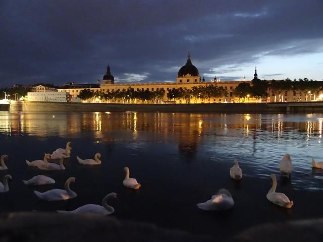 night & swans