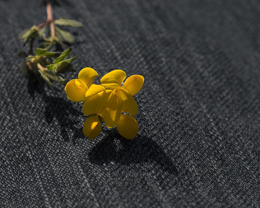 Flor sobre tela vaquera.