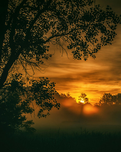 sunrise morning mist fog mood moody dawn daybreak lincolnmarsh wheatonillinois dupagecounty nature outdoors landscape misty foggy atmosphere tree foliage silhouette leaves orange gold golden may spring aura eerie flora amber glow magical mysterious mystical nikond5100 tamron18270 photoshopbyfehlfarben thanksbinexo