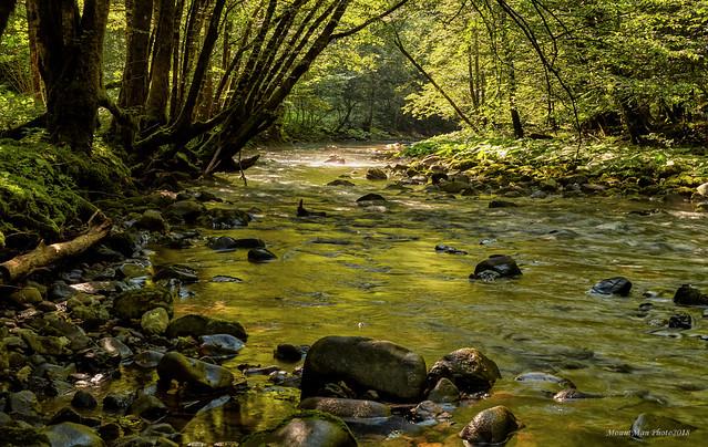Zelenozlatni odbljesci u vodi potoka Curka
