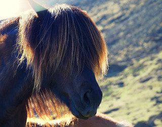 Icelandic Horse Hair | by joiseyshowaa