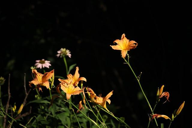 Fleurs lumineuses