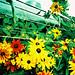 Lomo – flowers in the engine by lomomowlem