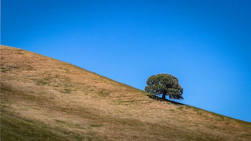 antiochca blackdiamondminesregionalpreserve bluesky california eastbay eastbayregionalparks grassland hills hillside ridge sanfranciscobayarea trees