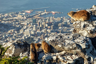 Dassie's Domain | by MarkMeredith