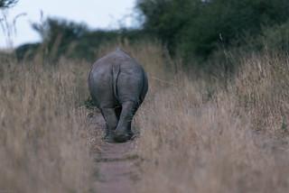 Namibia safari tour   by knipslog.de