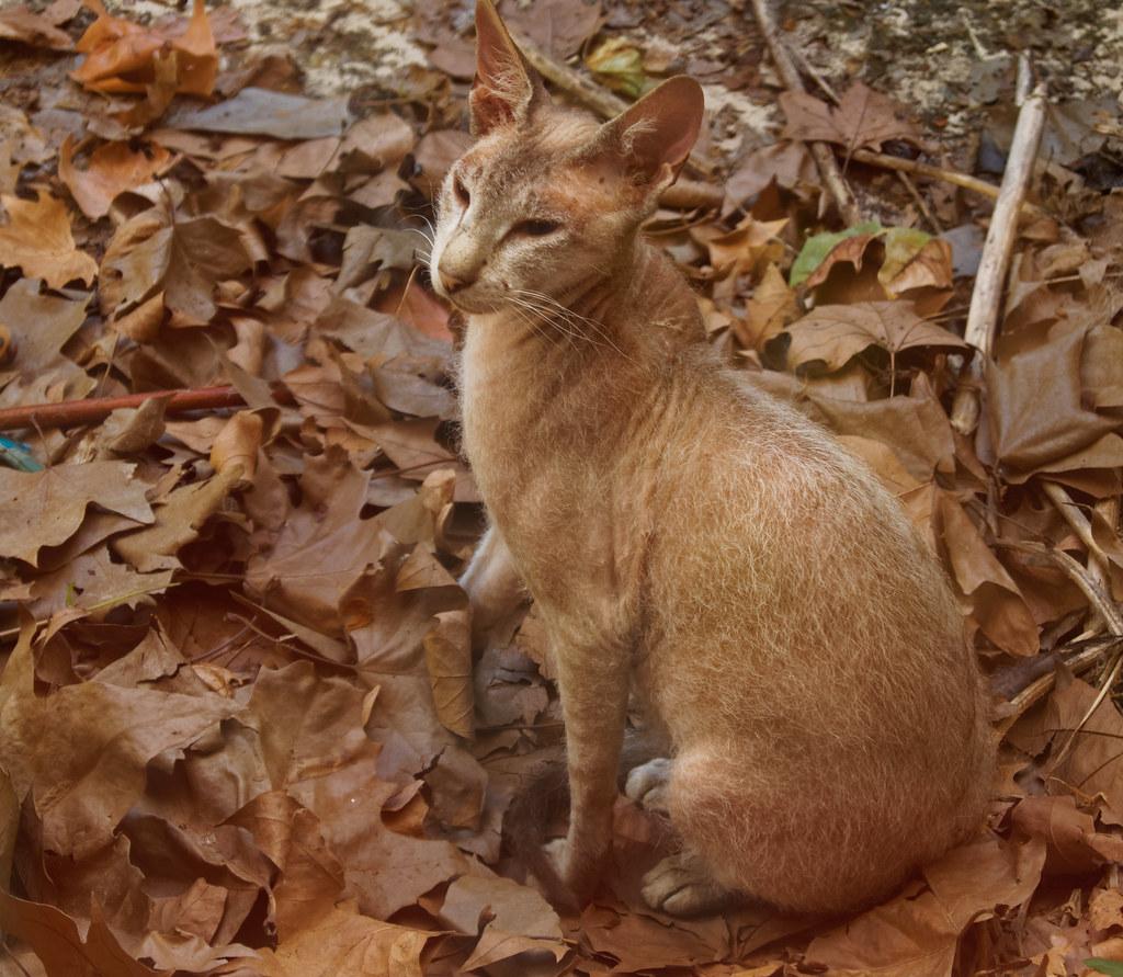 Le chat de la canicule - The cat of the heat wave