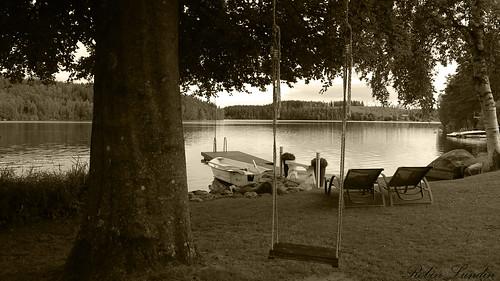swing water lake tree bath bathplace vatten trä gunga grå