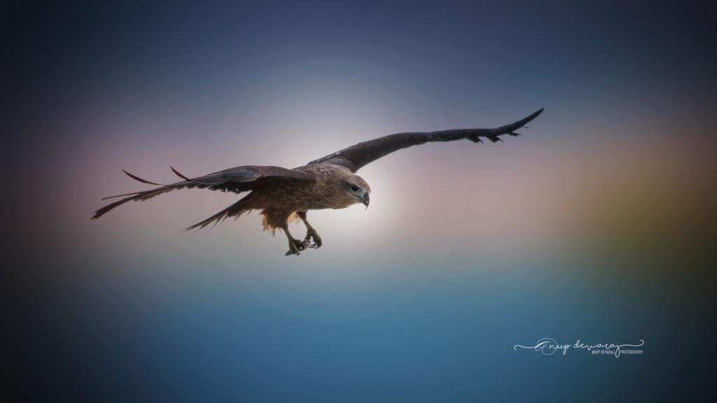 Eagle..