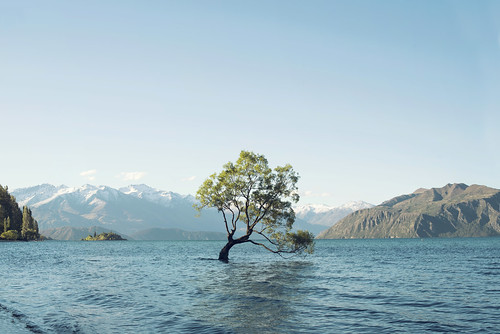 thatwanakatree mountain peak landscape blue wavy wave sky earth nature minimalism white antiquity ancient tree travel tourism experience valley cold winter green day light horizon dark natural explore shadow mountainous discover water riverbed rural snow border newzealand lake beauty intense scene brown huge forest wanaka wood sunset deep