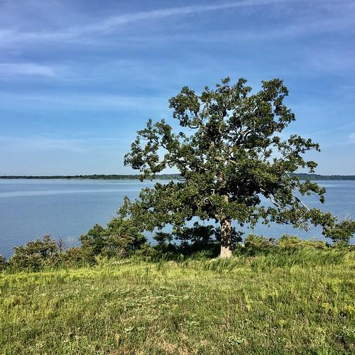 oklahoma trees