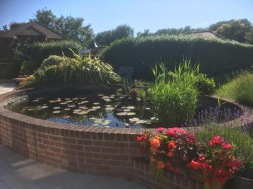 Pond clean Warsash