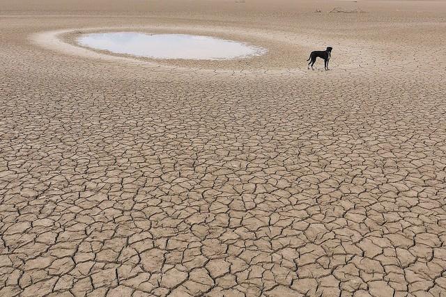 Wüstenhund