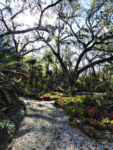 blazingsuninthegardens sugarmillgardens portorangeflorida scenic landscape park nature trees path foliage plants sky sunshine outdoors