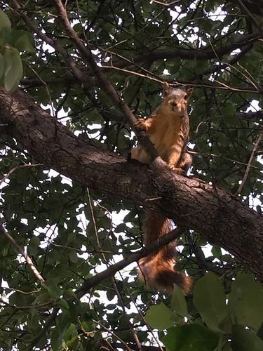 Dallas TX Cemetery Squirrels | by DanCentury