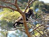 Long-Crested Eagle by Mandara Birder