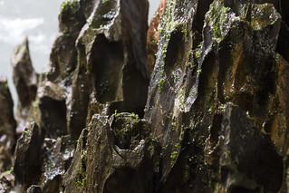 fissidens riccardia day 14 detail shot | by nigel_kh