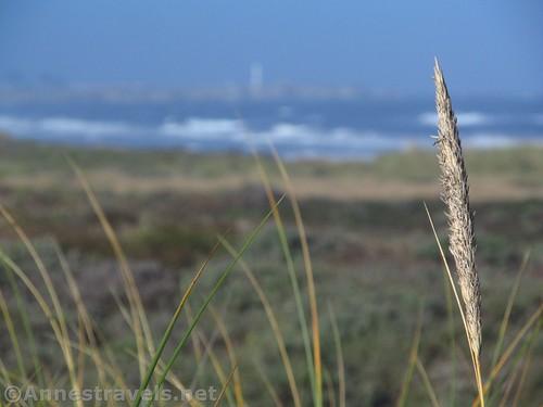 Sea grass at Manchester State Beach, California
