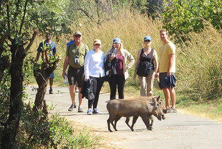 warthogs-victoria-falls   by quirkytravelguy
